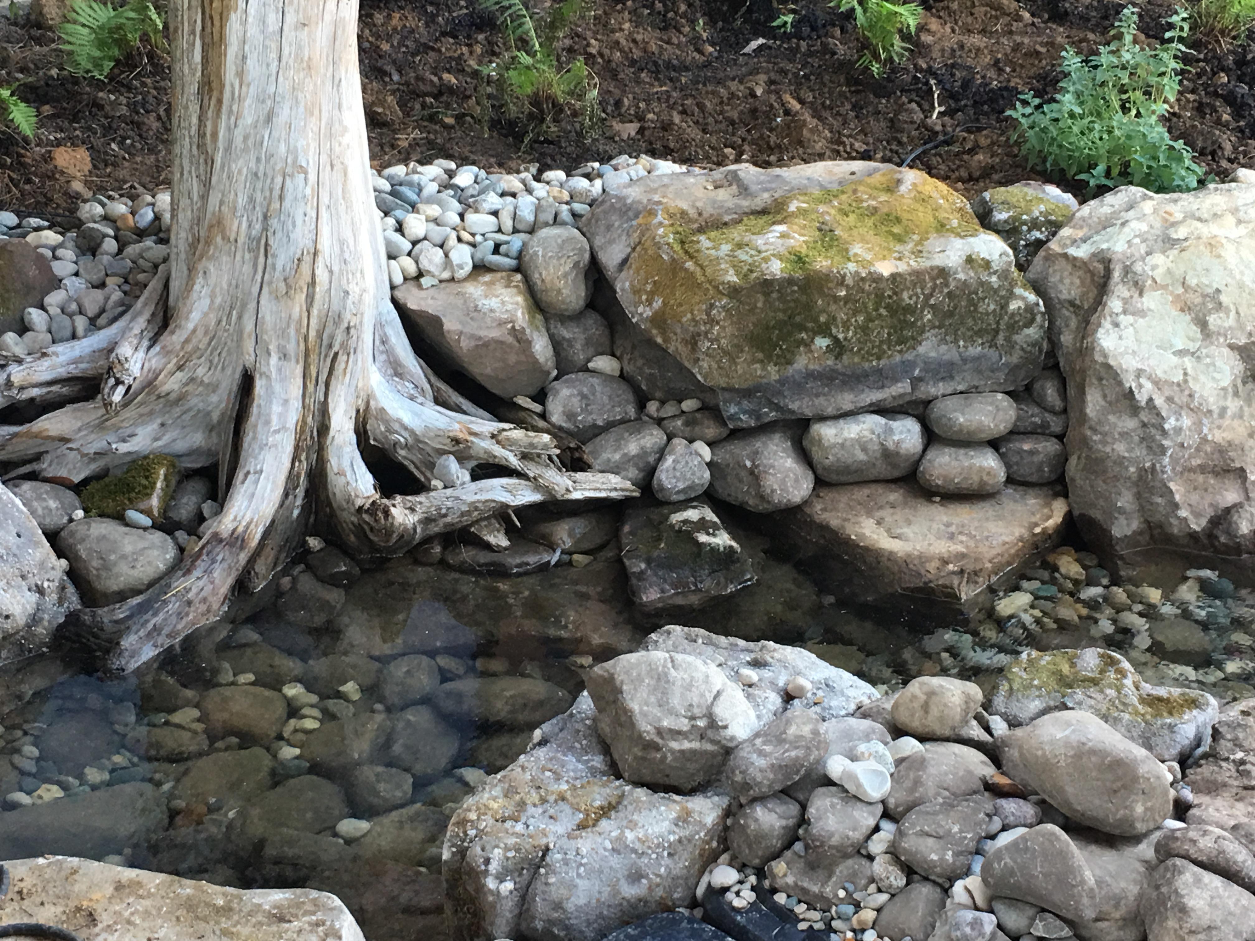 Natural Pond Design