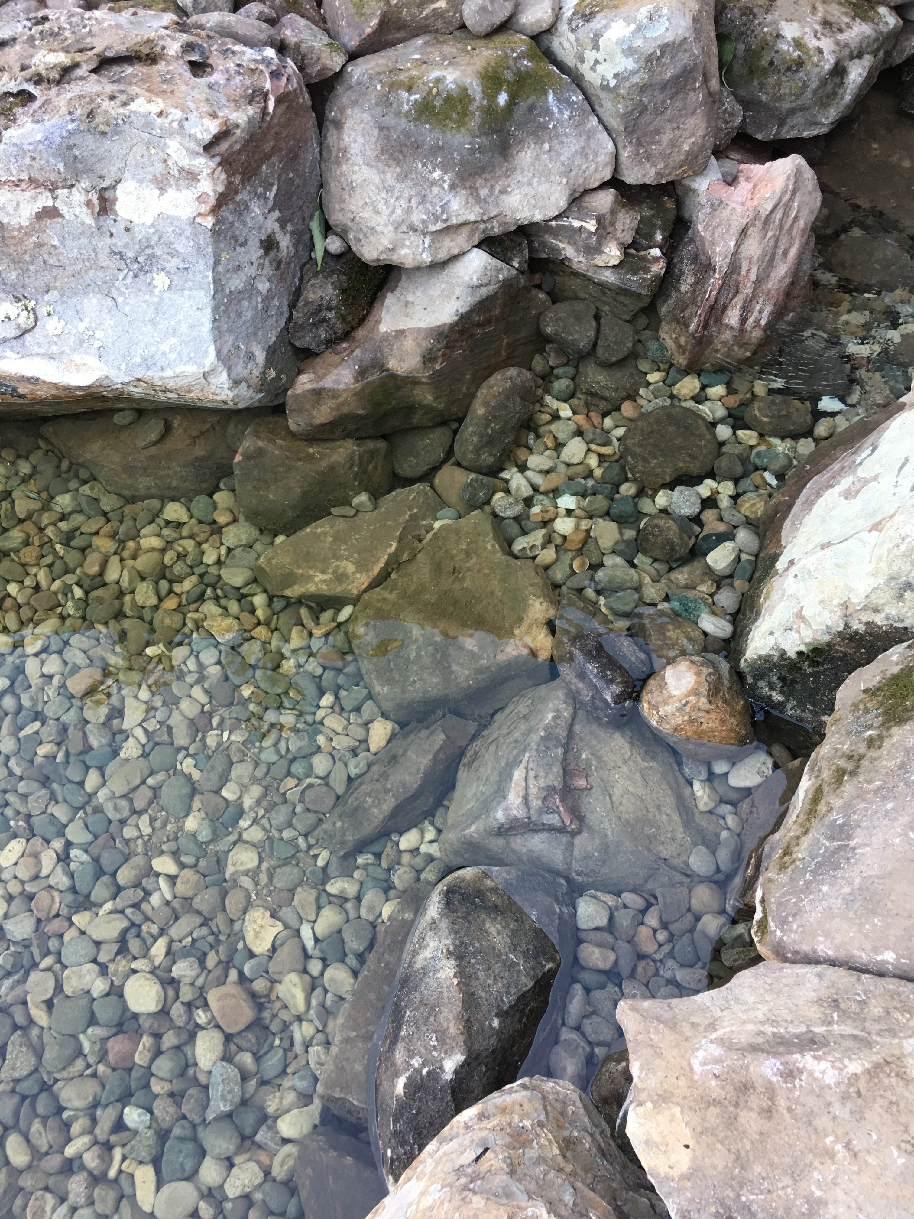 Natural Pond Design Detail