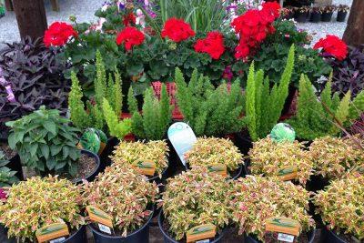 Summer Annual Plants At JVI Secret Gardens